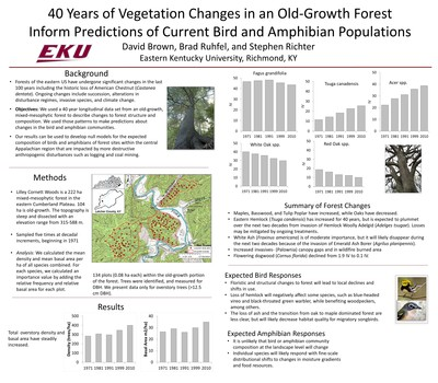 40 years of vegetation changes in an old-growth forest inform predictions of current bird and amphibian populations