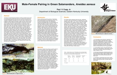 Male-Female Pairing In Green Salamanders, Aneides aeneus
