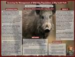 Assessing the Management of Wild Hog Populations at Big South Fork