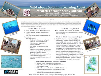 Wild About Dolphins: Learning About Research Through Study Abroad