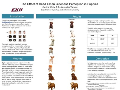 The Effect of Head Tilt on Cuteness Perception in Puppies